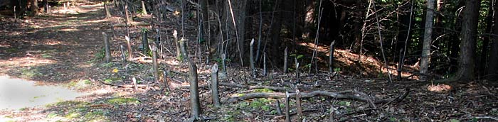 Texas Hollow Loop beaver buffet (M15) - Photo: R. Hopkins